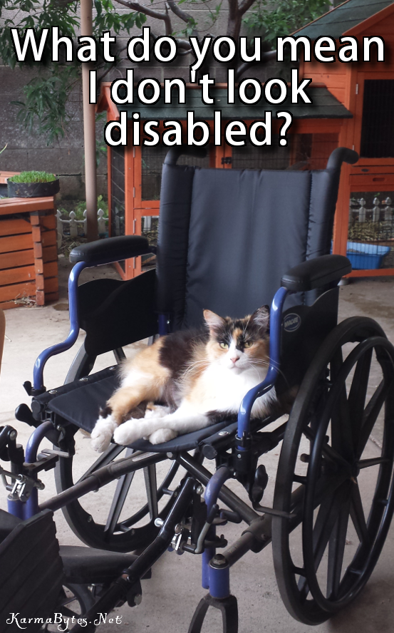 I don't look disabled?